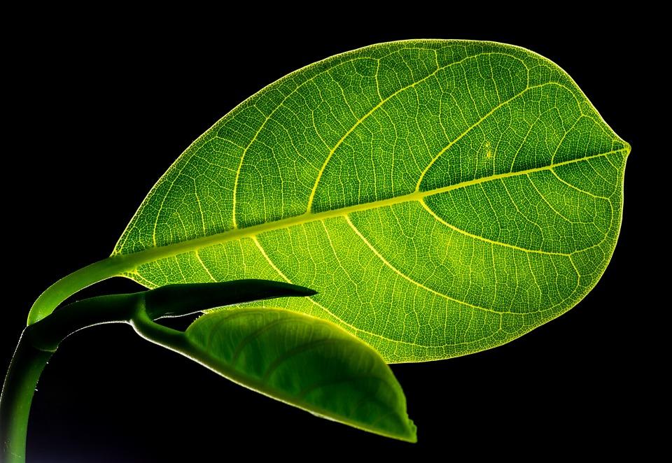 Leaves, Jackfruit, Plant, Flora, Nature, Closeup
