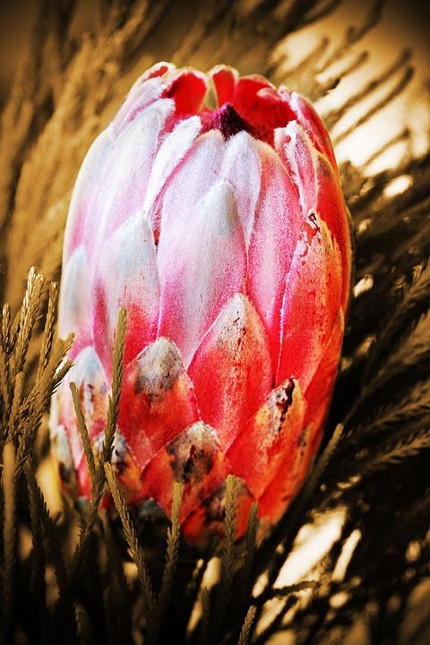 Bloom, Blossom, Close-up, Decoration, Exotic, Flora