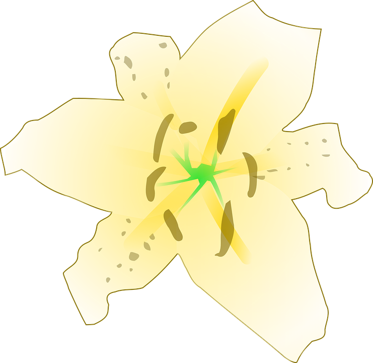 Lily, Flower, Yellow, Floral, Beautiful, Flora