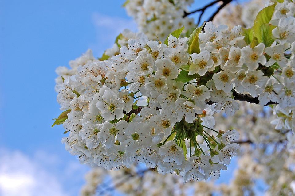 Flower, Flora, Nature, Branch, Tree