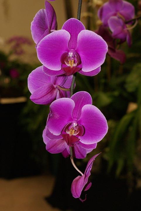 Flower, Nature, Flora, Petal, Beautiful, Blooming