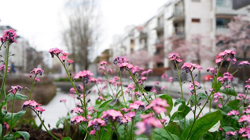 Flowers, Flower, Pink, Garden, Flora, Flowering