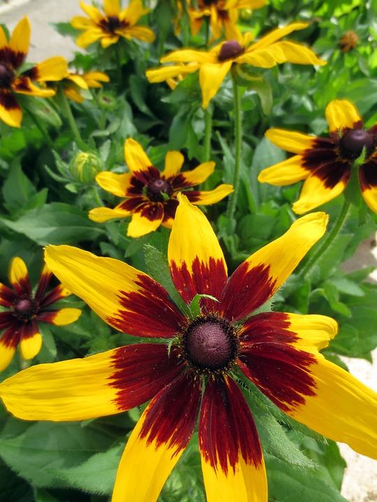 Flower, Nature, Flora, Garden, Summer, Botanical