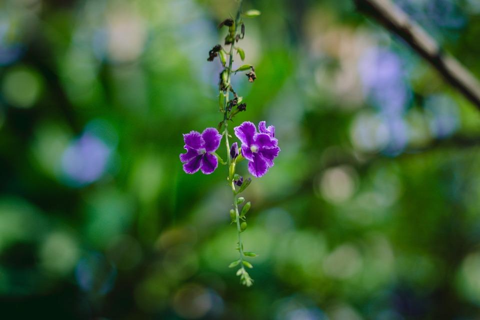 Flower, Cho, Flora, Plant, Flowers, Bouquet