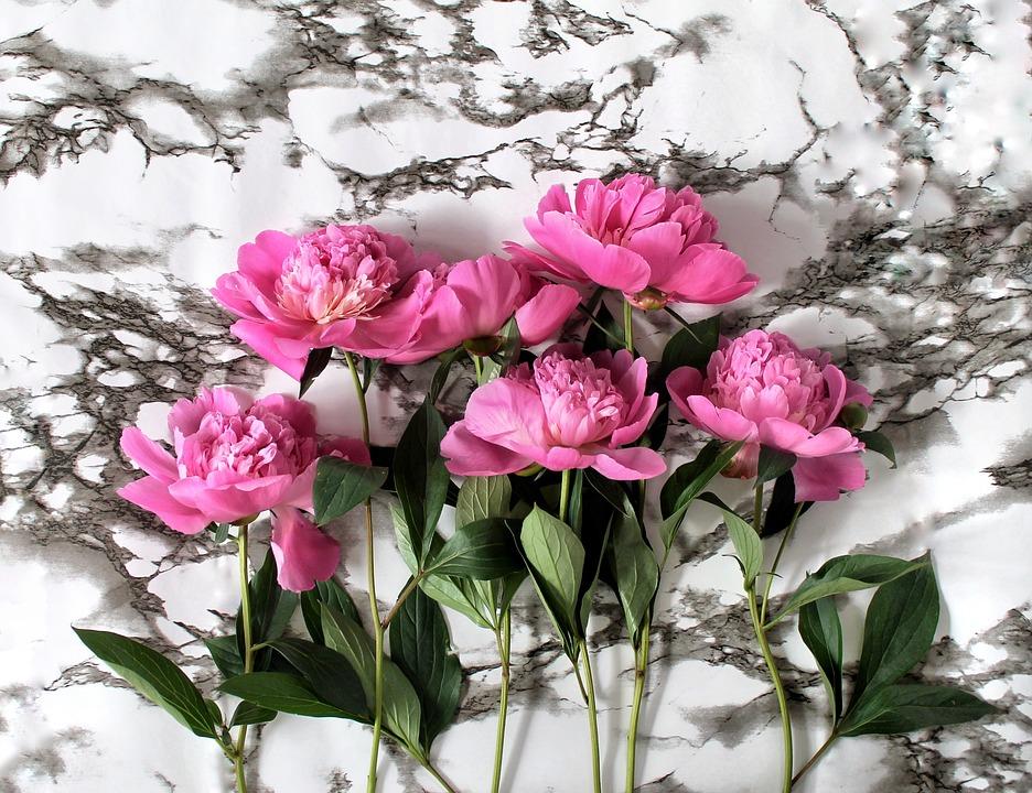 Peonies, Flowers, Plants, Flora, Nature, Flower Bed