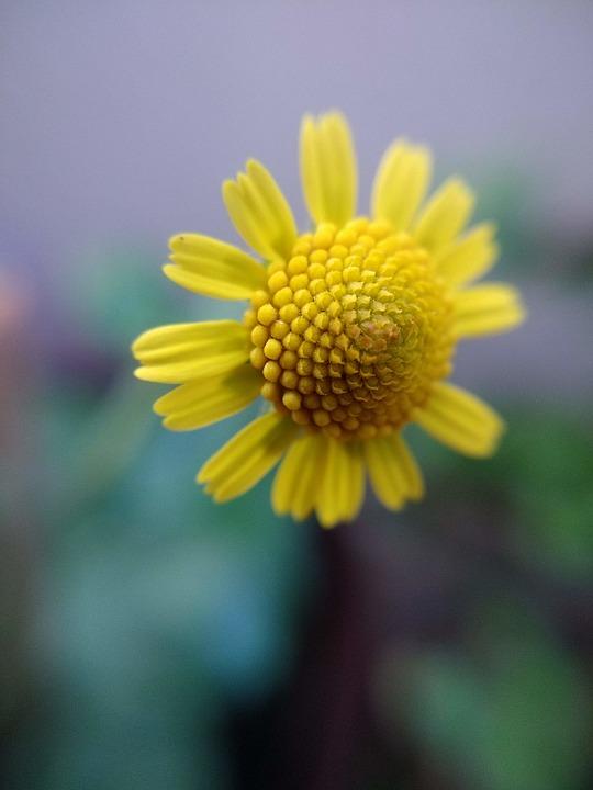 Flower, Nature, Flora, Flowers, Beautiful