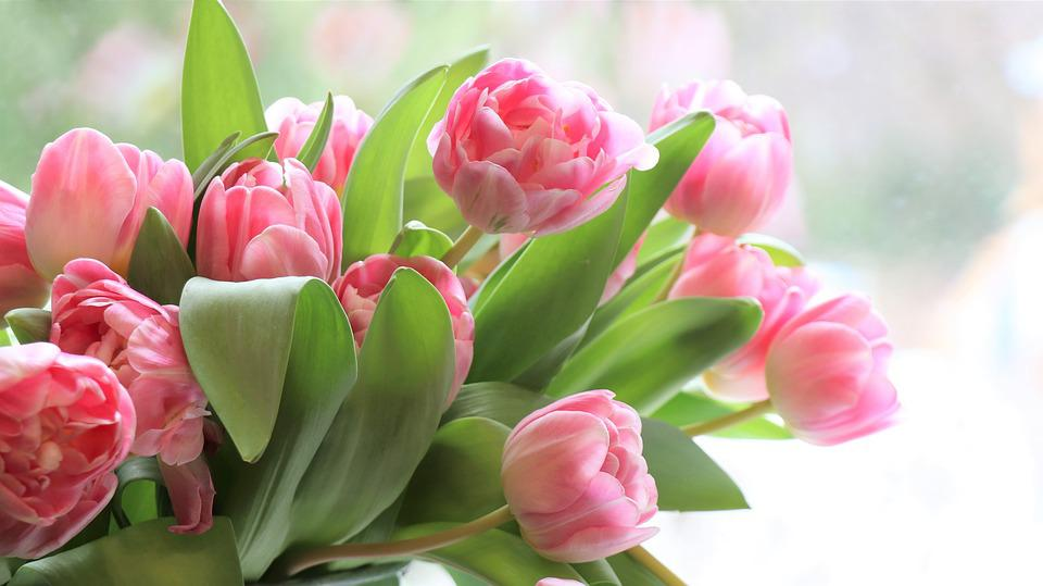 Tulips, Flowers, Flower, Pink, Spring, Bouquet, Flora