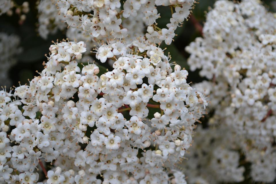 White Flower, Flower, Flowers, Spring, Flora