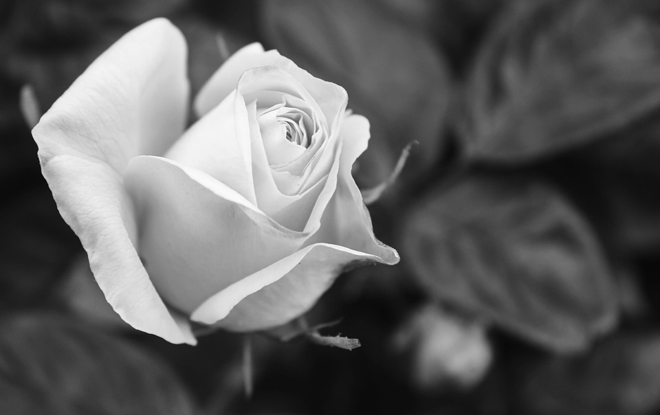 White, Nature, Flowers, Black And White, Spring, Flora