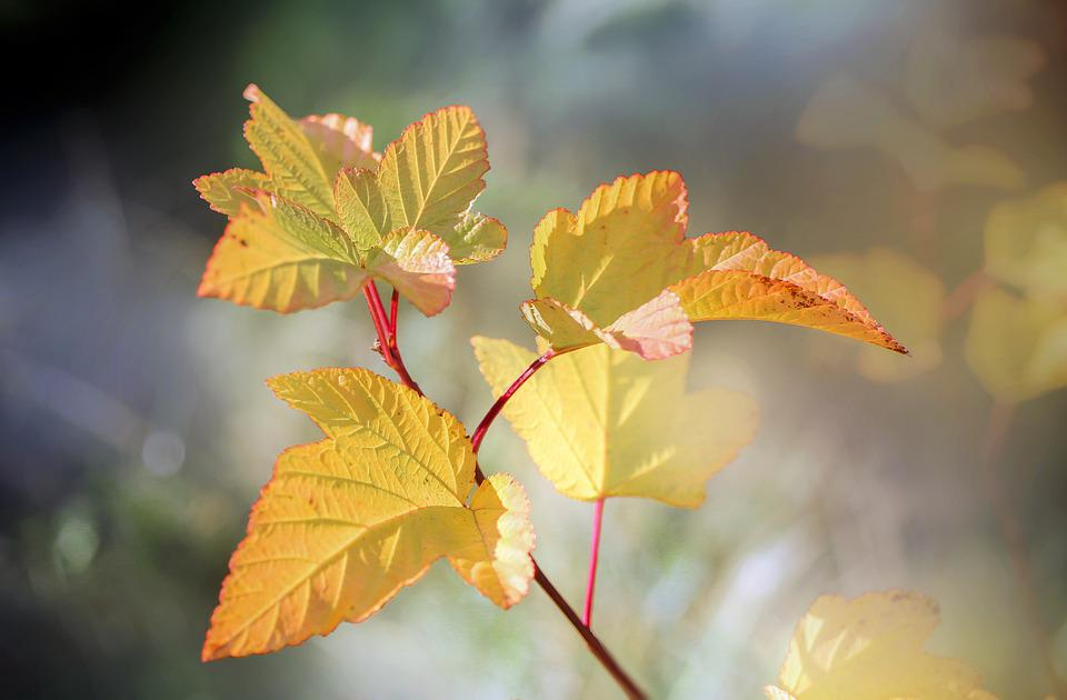 Leaves, Foliage, Plant, Bush, Sprig, Flora, Nature