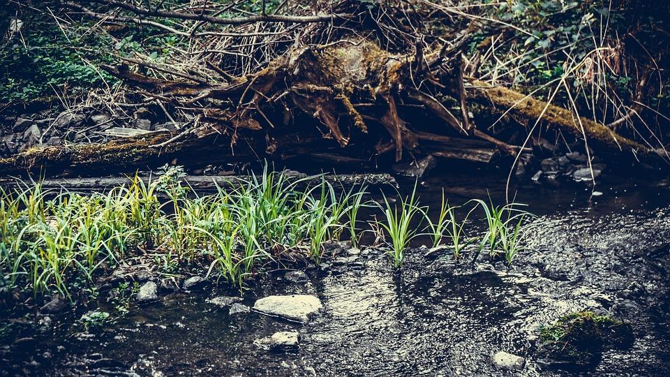 Nature, Grass, Flora, Forest, Landscape, Summer