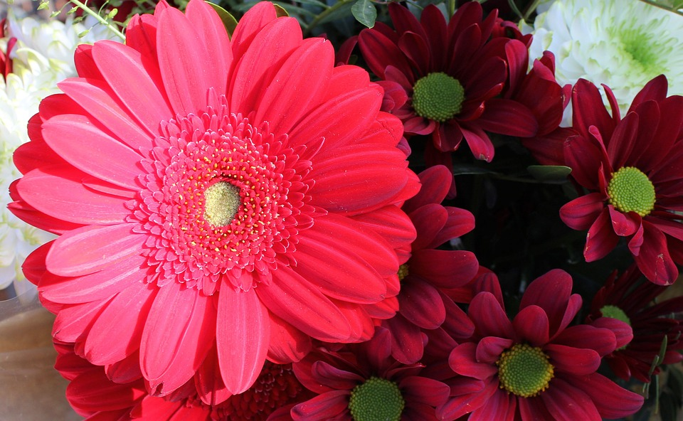 Flower, Flora, Nature, Petal, Bouquet, Blossom, Garden