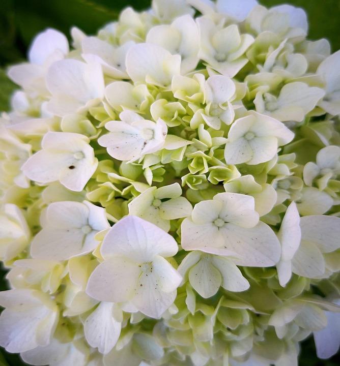 Flowers, White, Spring, Garden, Flower, Nature, Flora