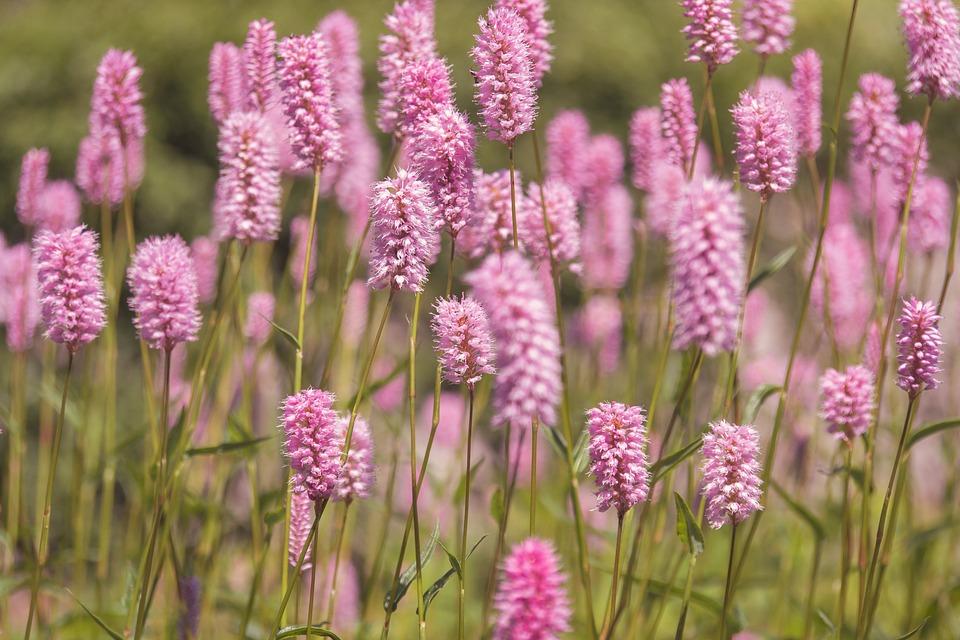 Meadow, Flower Meadow, Flowers, Garden, Flora, Spring