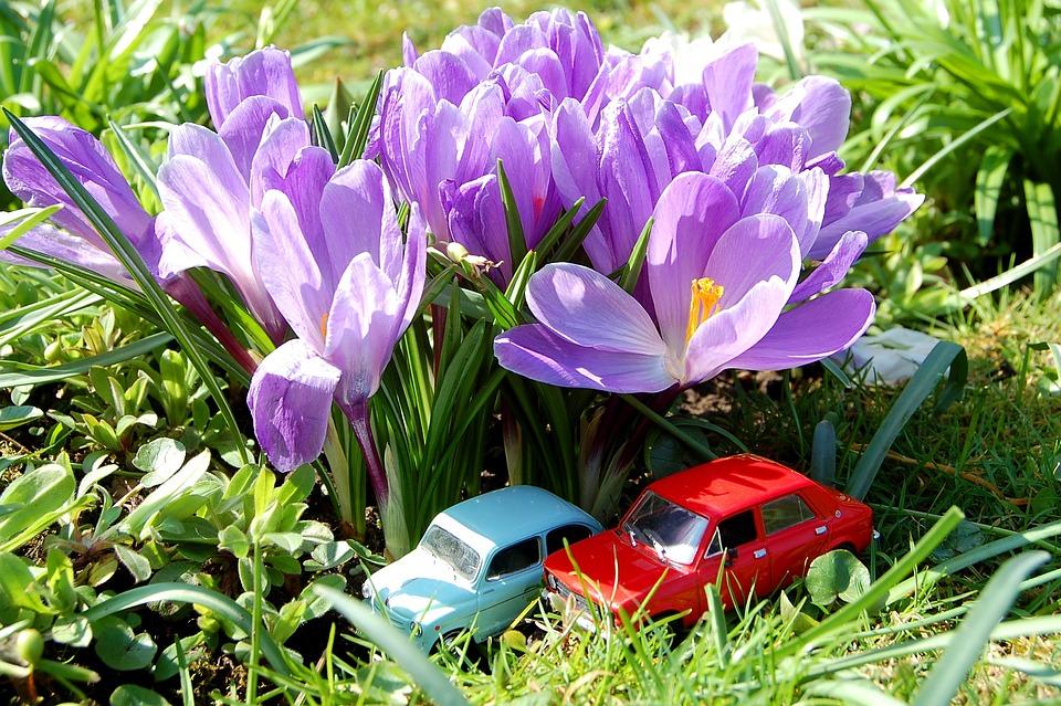 Flower, Nature, Garden, Flora, Leaf