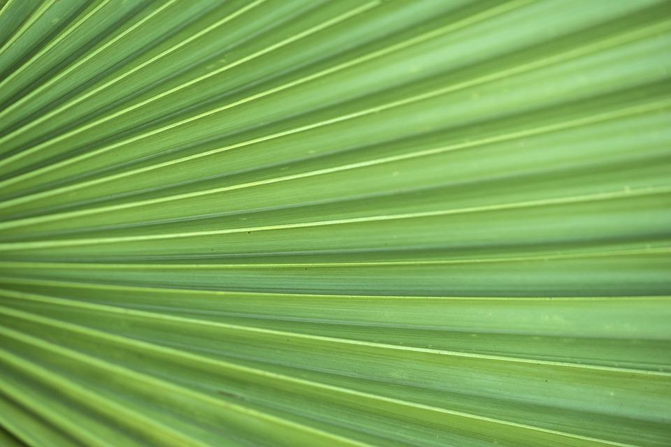 Leaf, Flora, Growth, Nature, Desktop, Garden, Pattern