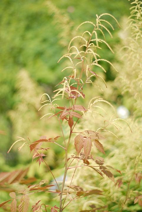 Nature, Flora, Leaf, Summer, Grass