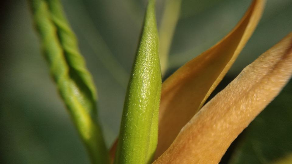 Leaf, Outdoors, Flora, Nature, Growth, Invertebrate