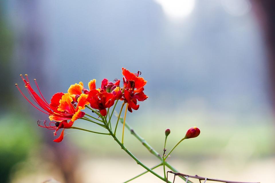 Nature, Flower, Flora, Leaf, Garden