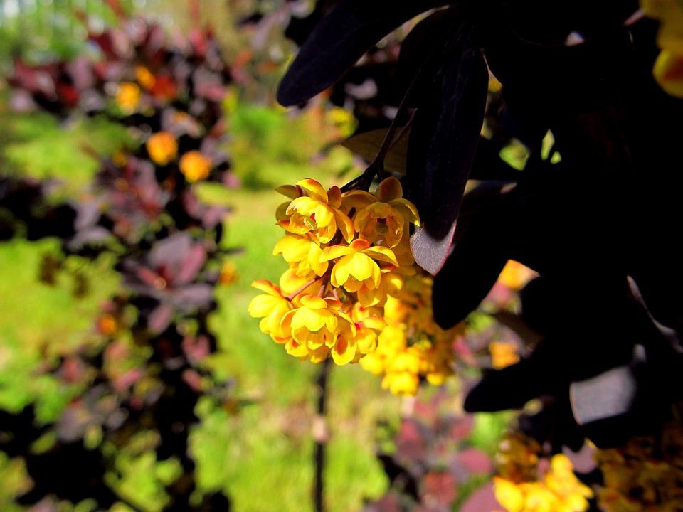 Flower, Nature, Flora, Leaf, Garden, Blossom, Spring