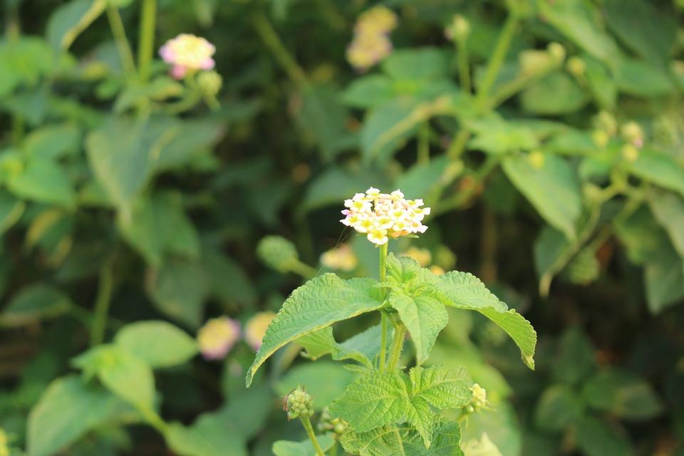 Nature, Leaf, Flora, Flower, Summer