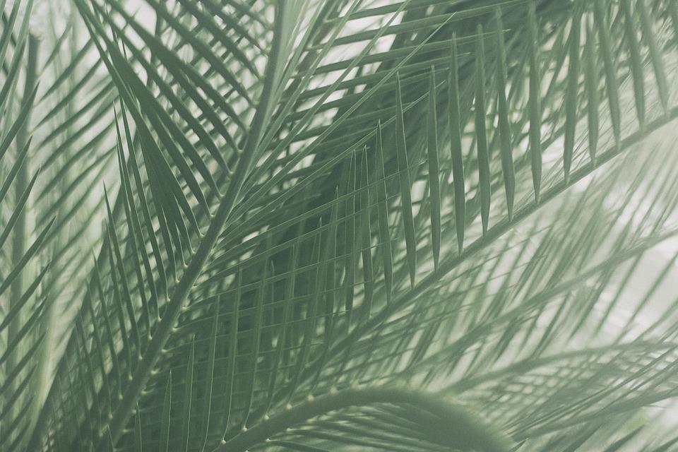 Palm, Leaves, Foliage, Nature, Flora, Green Foliage