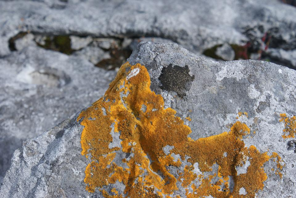 Nature, Flora, Lichen, Stone, Rock Lichen, Wild, Yellow