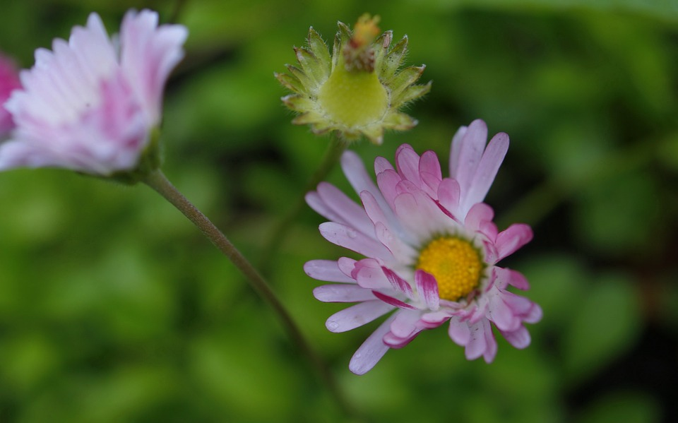 Flora, Fauna, Flowers, Macro