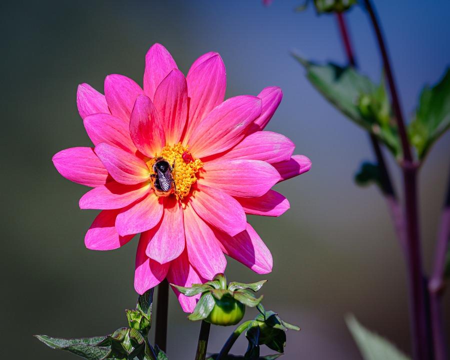 Flowers, Autumn, Flora, Nature, Autumn Flower, Macro