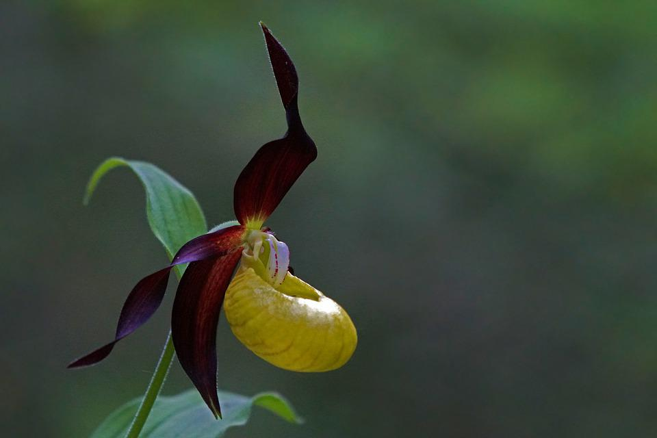 Orchid, Flower, Flowers, Nature, Exotic, Flora, Spring