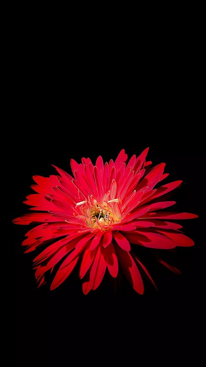 Flower, Flora, Nature