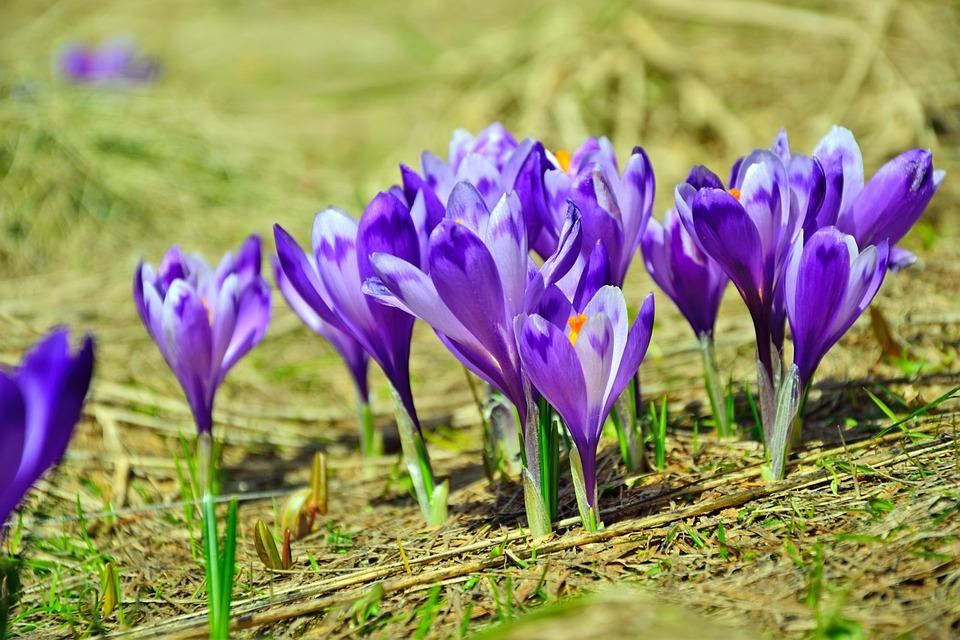Nature, Flower, Flora, Season, Growth