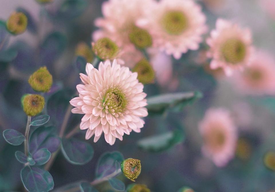 Flower, Flora, Nature, Summer, Garden