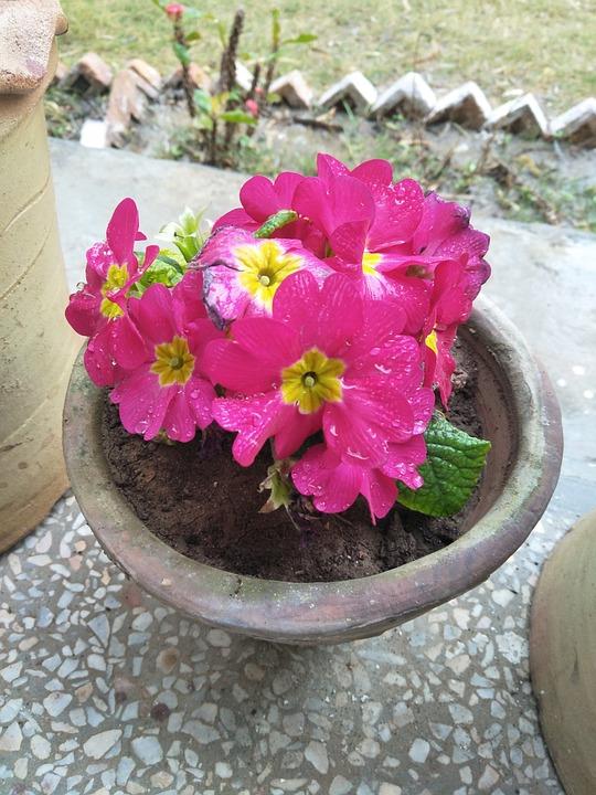 Flower, Nature, Flora, Pot, Garden