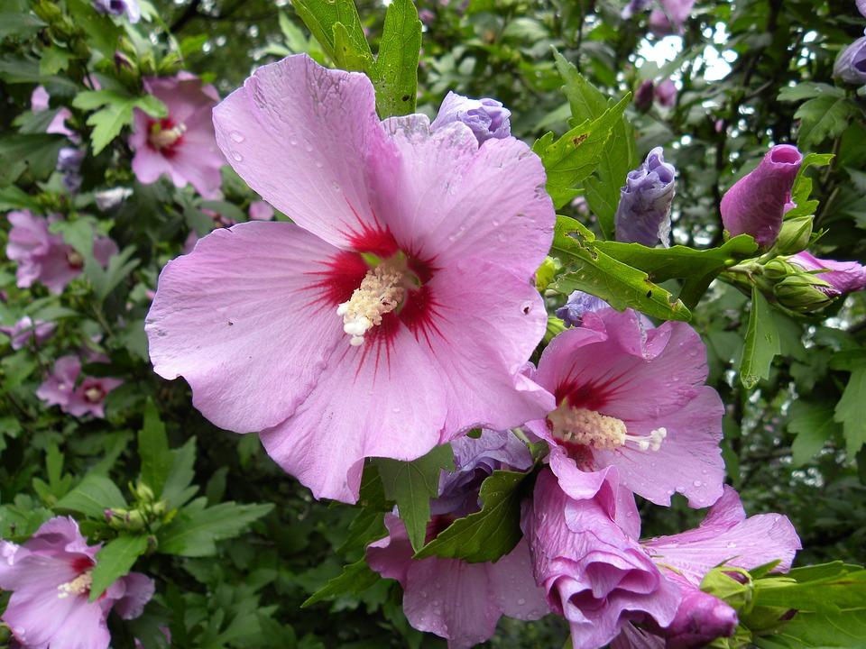 Flower, Purple, Purple Flowers, Garden, Flora, Nature