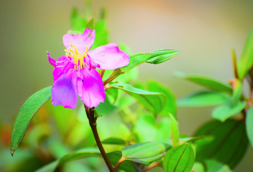 Nature, Flora, Leaf, Flower, Closeup