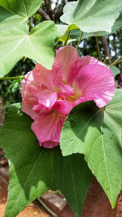 Nature, Flora, Leaf, Summer, Flower