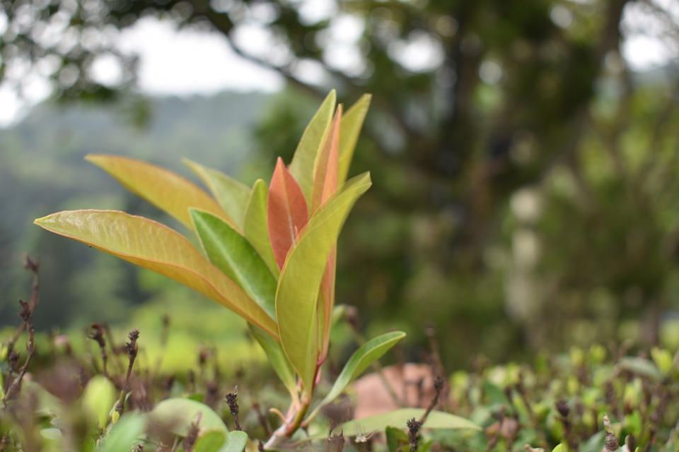 Nature, Flora, Leaf, Tree, Growth, Little