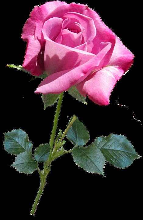 Flower, Nature, Flora, Love
