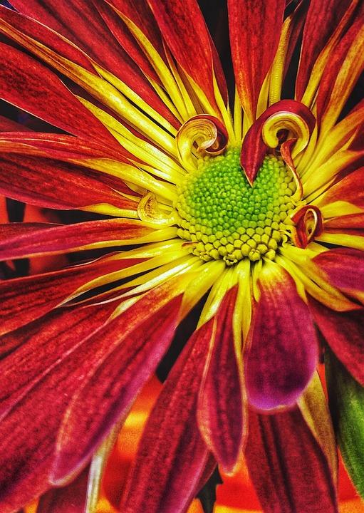 Flower, Nature, Flora, Color, Bright, Orange, Red