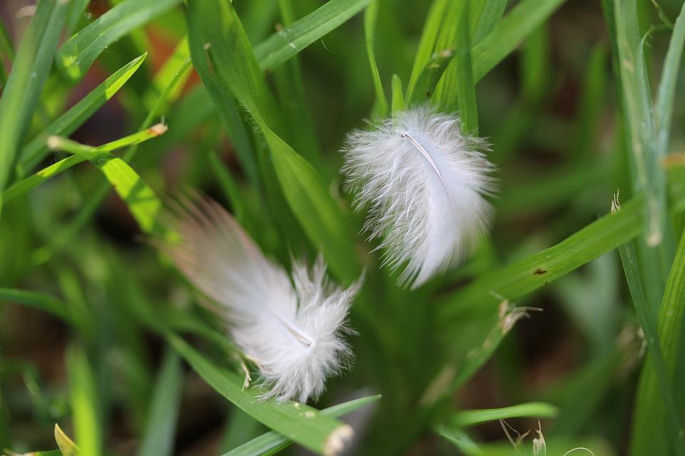 Nature, Flora, Grass, Leaf, Summer, Closeup, Outdoors
