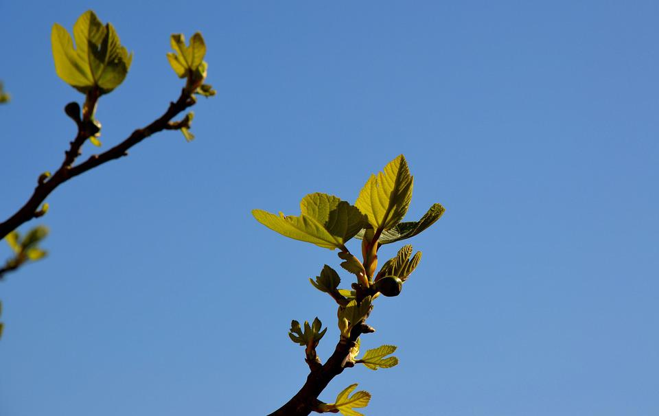 Leaf, Nature, Tree, Growth, Flora, Branch, Outdoors