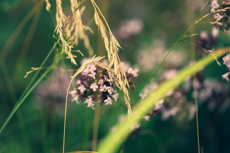 Flower, Petals, Straw, Nature, Flora