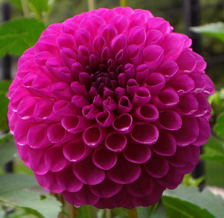 Flower, Purple, Flora, Petals, Botany, Botanical