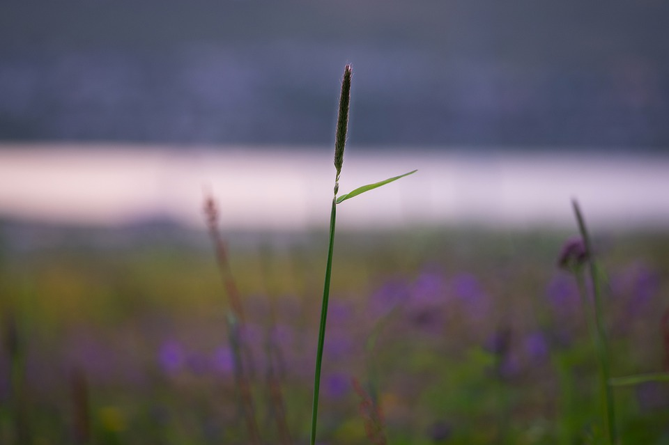Grass, Plant, The Nature Of The, Summer, Green, Flora