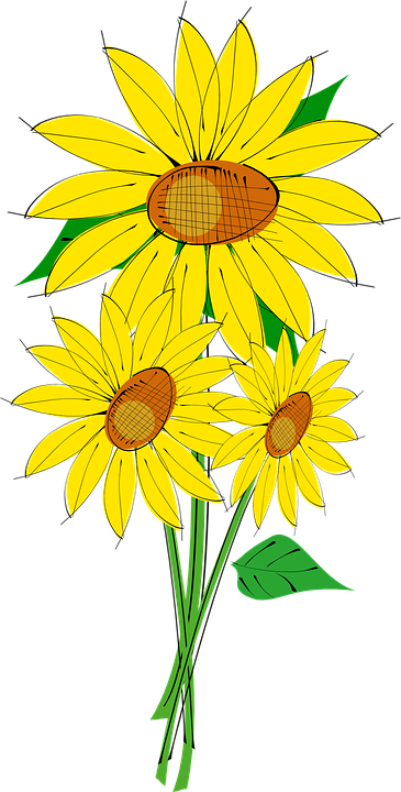 Sun, Flower, Plant, Sunflower, Beautiful, Flora