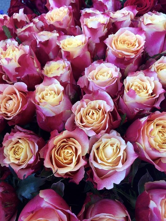 Roses, Love, Flowers, Romantic, Blossom, Bloom, Flora