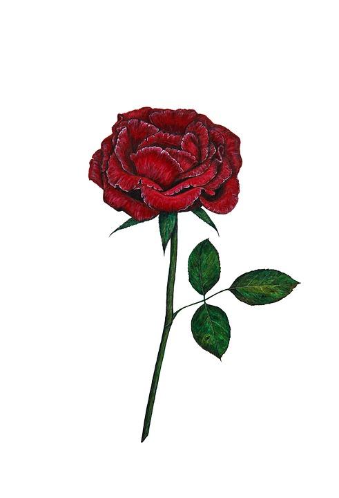 One, Creative, Artistic, Red, Garden, Rose, Stem, Flora