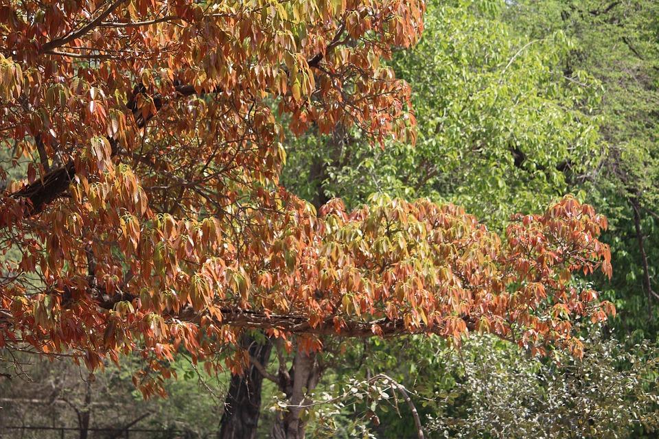 Nature, Leaf, Tree, Season, Fall, Flora, Landscape