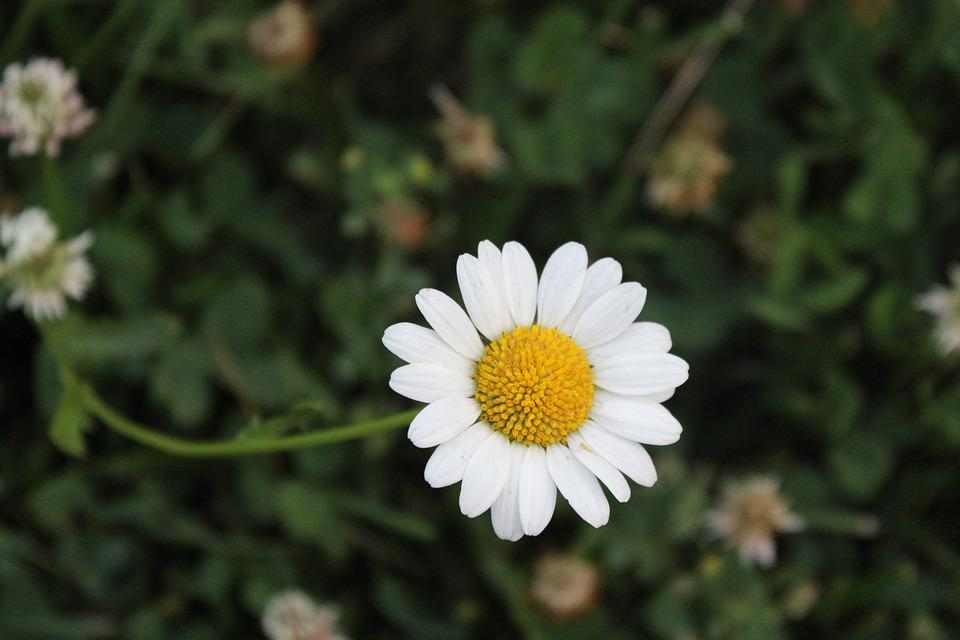 Flower, Nature, Flora, Summer, Floral, Garden, Season